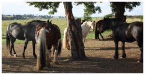 Pferdehaltung im Offenstall